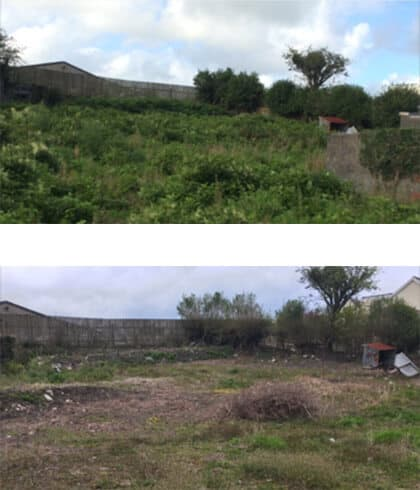 Bristol Knotweed Removal Service before & after